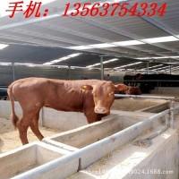 贵州小黄牛基地 活牛价格 哪里有卖小黄牛的