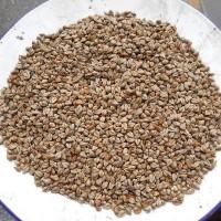产地直销100斤/袋苦荞麦 酿酒苦荞麦,烧酒荞麦食品荞麦 不包邮