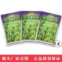 凤鸣雅世 农家播种蔬种子盆栽菜种子 大橡生2号绿色生菜种子 5克