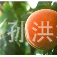 果树类0.4桃苗1年中国种苗2-3年桃苗欢迎洽谈