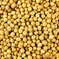 黄豆五谷杂粮豆浆包原味豆浆
