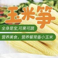 广西横县新鲜产地现摘玉米笋水果玉米迷你小玉米带皮去皮包邮代发