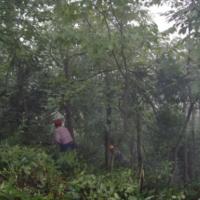 国家地理标志保护产品 钱塘江源头特产 多年出口17年有机茶