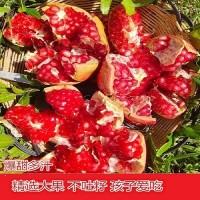 四川会理突尼斯软籽石榴精品新鲜现摘速发纯甜孕妇水果整箱包邮