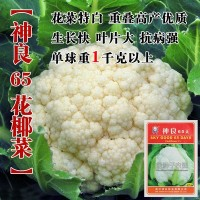 花椰菜种子花椰菜籽菜花种子松花菜种籽蔬菜种子菜种瓜果蔬菜种子