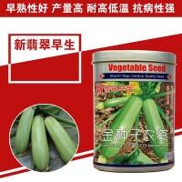 西葫芦种子西葫芦籽蔬菜种子批发菜种菜籽菜种子公司四季播种