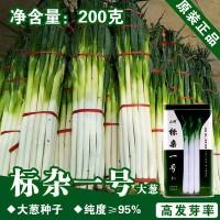 大葱种子大葱籽蔬菜种子批发菜种菜籽种子公司四季播种