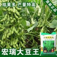 毛豆种子菜用种子大豆黄豆种子黄豆籽种子蔬菜种子批发菜种公司