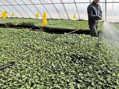 茄子的育苗时间及方法