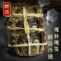 10只全母满黄大闸蟹鲜活大螃蟹包邮母蟹礼盒1-4两源产地冷链直发