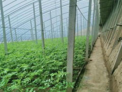 金秋旅游打卡来牛庄 谭家园子:绘就美丽动人的生态农业新画卷